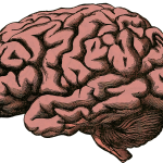 Read More: Common drug has been found to shrink brain volume